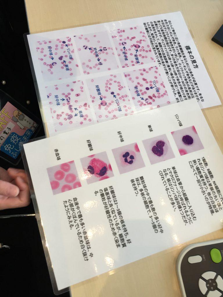 免疫学のワークショップで顕微鏡で血液